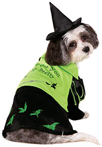 wicked witch costume dog